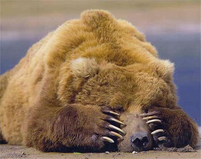 portner-bear