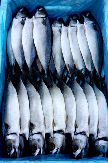 pastuszek.fish